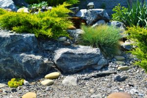 Хвойные растения для альпинария, водопад рядом с ним можжевельник, каскад альпинарий водопад, ландшафтный дизайн