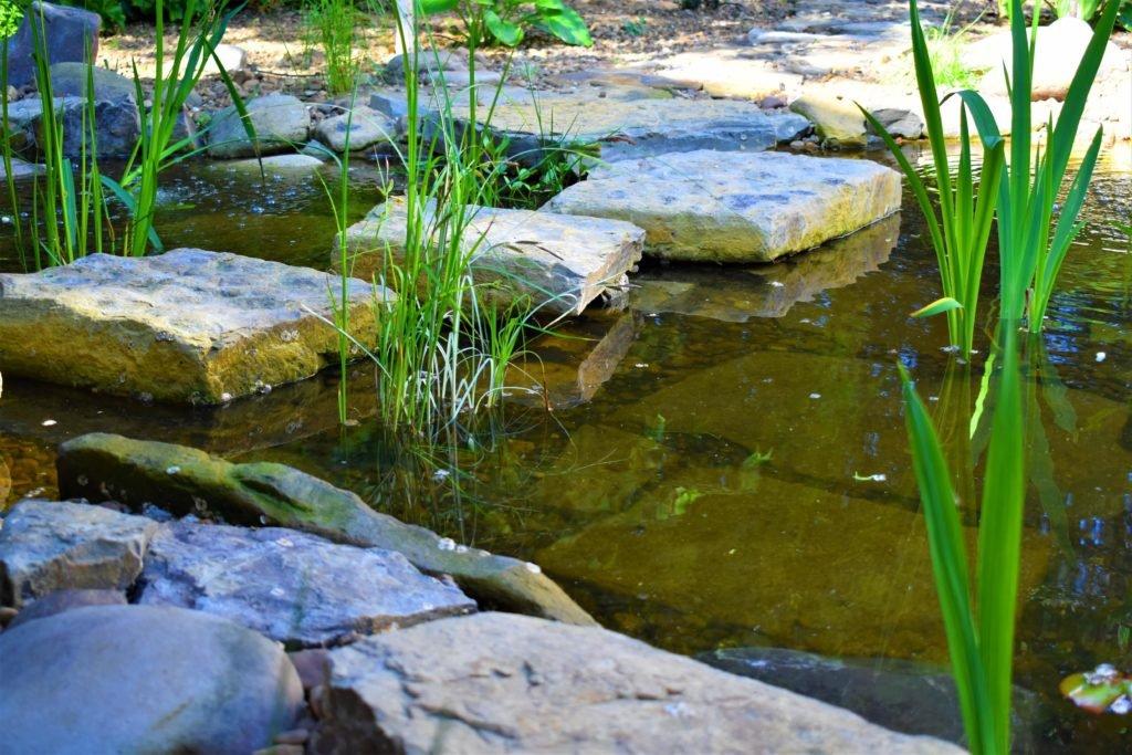 Ландшафтный дизайн в Мелитополе, строительство прудов, декоративный пруд, пруд для рыбы, ландшафтный дизайн
