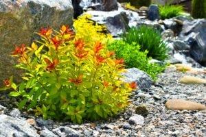 Рокарии, спиреи в японском саду, японский сад, ландшафтный дизайн