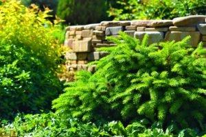 Весенняя высадка хвойных, плюсы и минусы весенней пересадки, посадить весной растения, ландшафтный дизайн