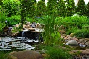 пруд ландшафтный дизайн, строительство декоративных прудов в Мелитополе, водоем Мелитополь, ландшафтный дизайн