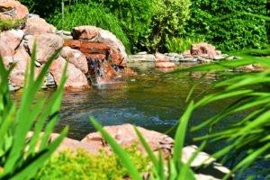 водные растения для биоплато, купи водные растения и получи фильтрацию, фильтрация растениями, ландшафтный дизайн