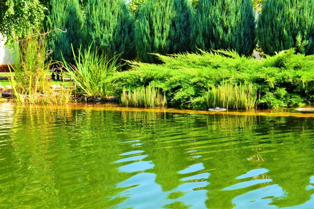 Плавательный пруд Запорожье, плавательный водоем Запорожье, плавательный Бассейн Запорожье, Биопруд Запорожье, Биобассейн Запорожье