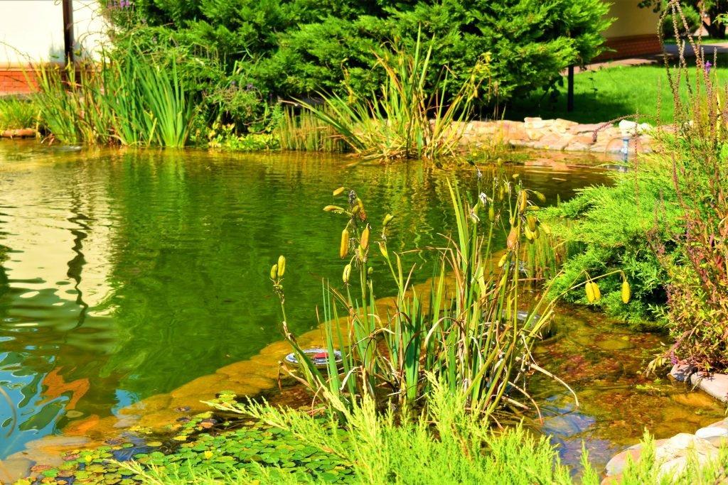 Плавательный пруд, плавательный водоем, плавательный Бассейн, Биопруд, Биобассейн