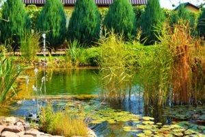 Строительство искусственного пруда Запорожье, благоустройство и озеленение искусственного пруда Запорожье, искусственный пруд Запорожье, создание искусственного пруда Запорожье