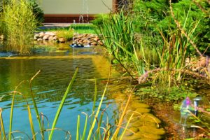 декоративный пруд Запорожье, декоративный бассейн Запорожье, декоративный биобассейн Запорожье, декоративный водоем Запорожье, декоративный биопруд Запорожье