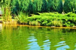 плавательный пруд Запорожье, плавательный бассейн Запорожье, плавательный биобассейн Запорожье, плавательный водоем Запорожье, плавательный биопруд Запорожье