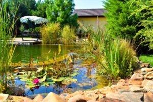 природное оформление пруда Запорожье, стоимость бассейна Запорожье, природное оформление биобассейна Запорожье, природное оформление водоема Запорожье, стоимоть биопруда Запорожье