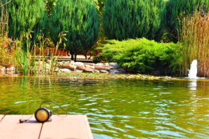 уход за прудом Запорожье, уход за бассейном Запорожье, уход за биобассейном Запорожье, уход за водоемом Запорожье, уход за биопрудом Запорожье