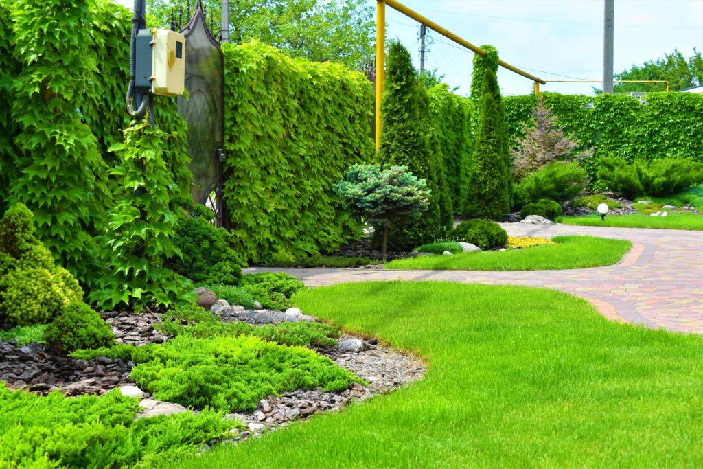Озеленение участка в Запорожье, озеленение двора в Запорожье, озеленение дачи в Запорожье, озеленение сада в Запорожье