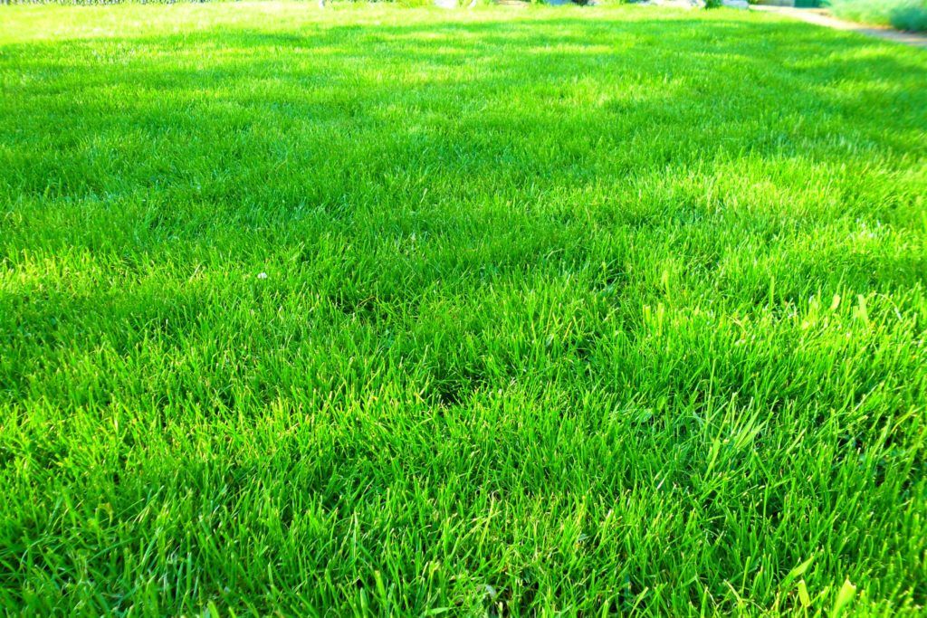 Газон на базе отдыха Мелитополь, газон на море Мелитополь, газон для туристических баз Мелитополь, какой газон на мере, газон