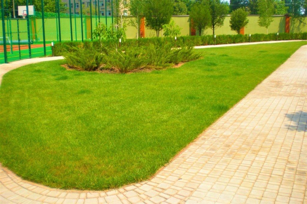 Газон на участке Днепр, газон на даче Днепр, газон во дворе Днепр, газон в саду Днепр, газон