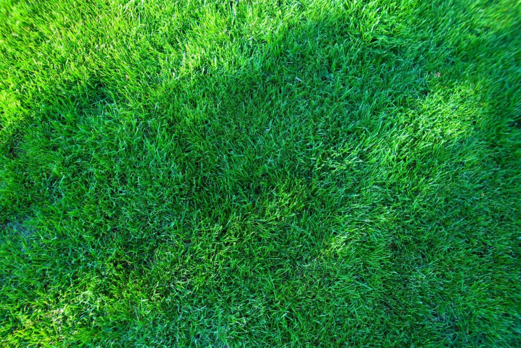 Газон перед магазином Мелитополь, газон на предприятии Мелитополь, газон на производстве Мелитополь, газон перед кафе Мелитополь