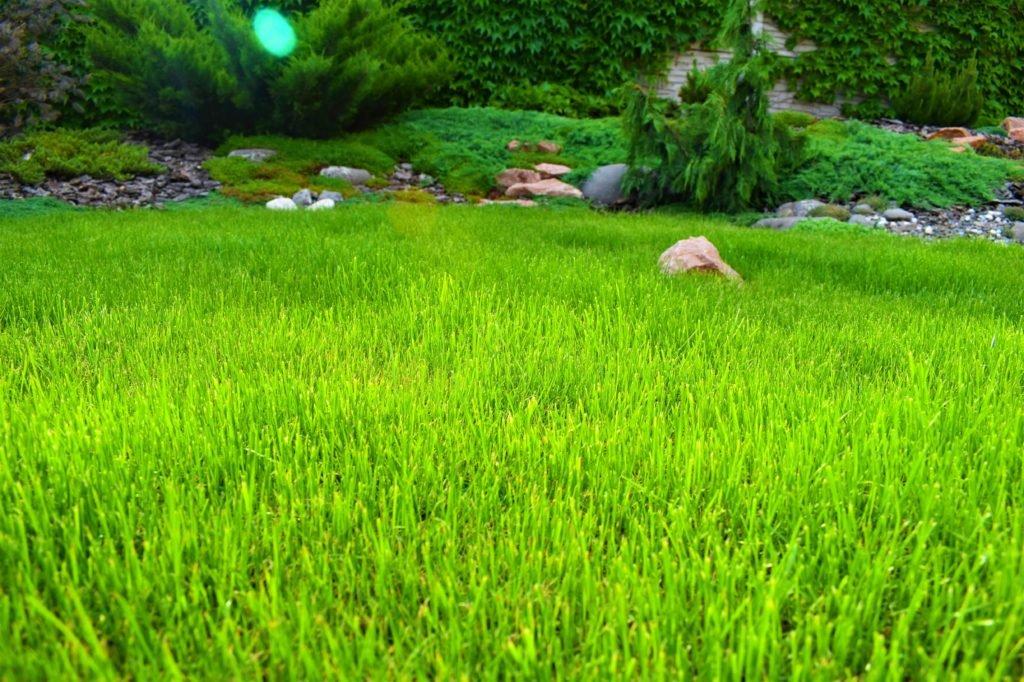 купить газон в Запорожье, семена газонные Запорожье, все для газона Запорожье, красивый газон Запорожье
