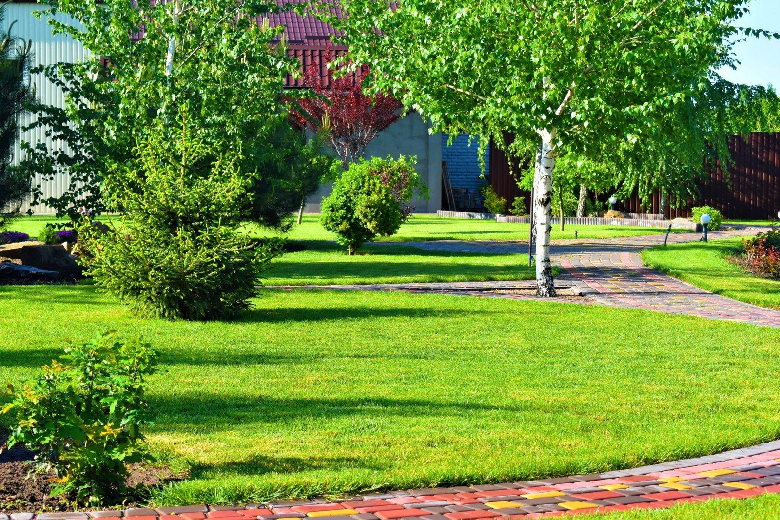 Планировка и озеленение участка в Киеве, озеленение участка домом в Киеве, озеленение в Киеве