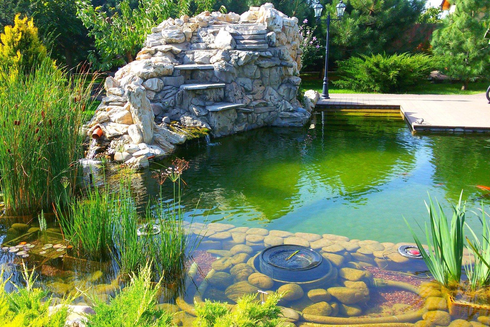 Благоустройство пруда на загородном участке, расположить искусственный водоем, Природный пруд,