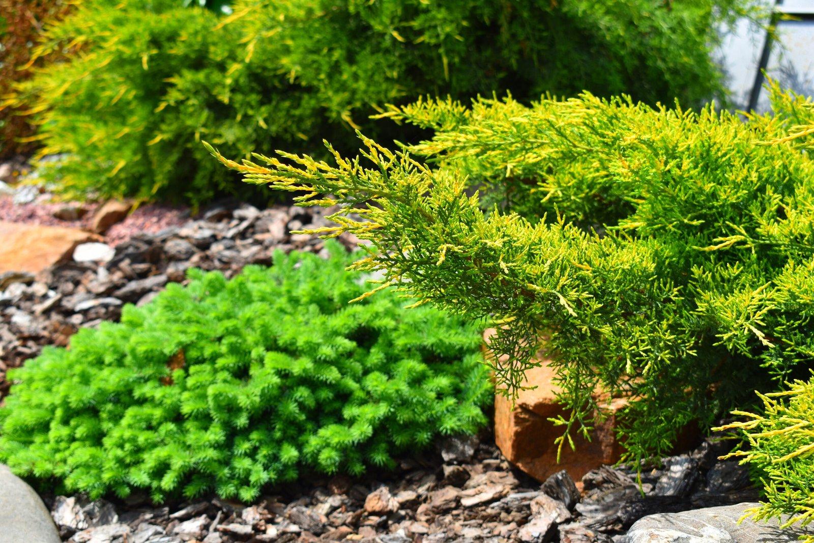 Озеленение на участке, концепции озеленения, классический стиль озеленения,