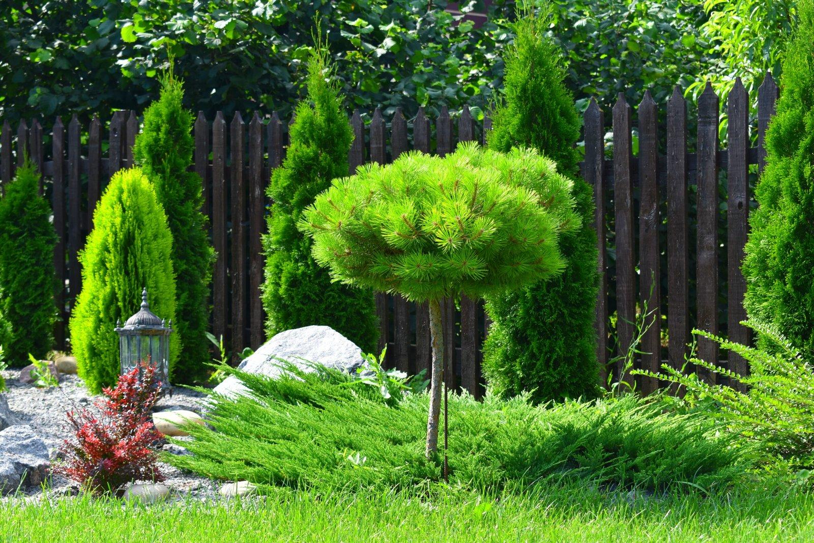 услуги по озеленению и благоустройству загородных домов Киев, Стоимость работ по созданию газона Киев,