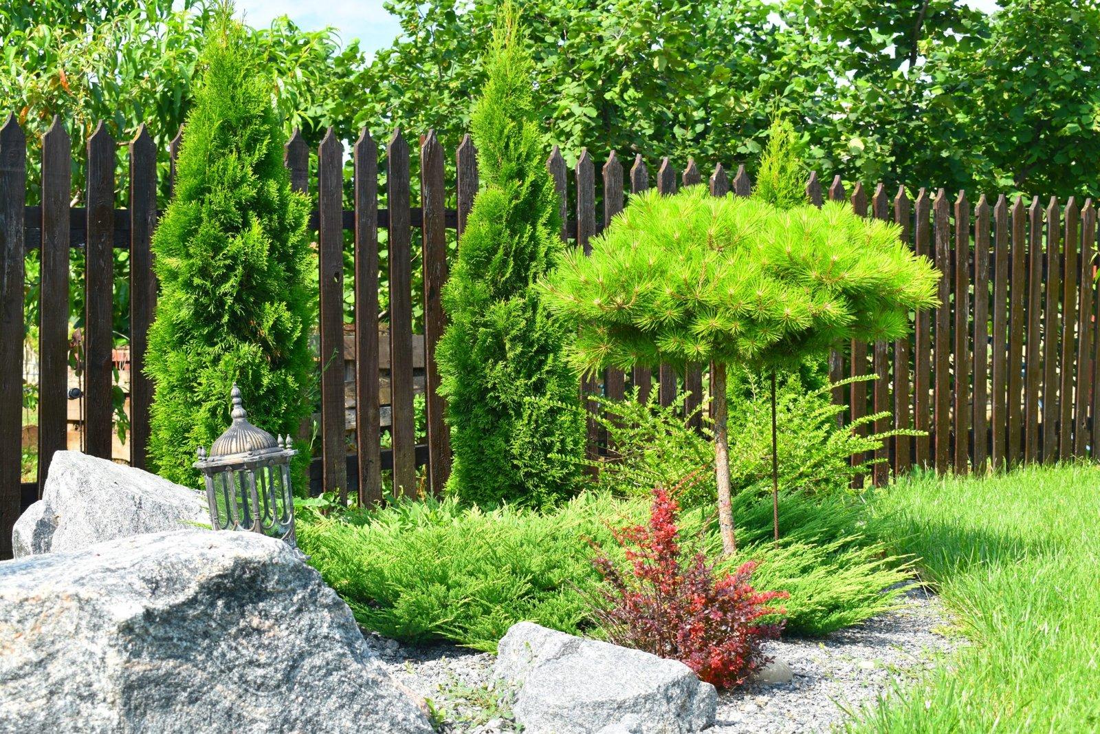 устройство газона в Киеве, устроить газон на участке в Киеве, высадка декоративных растений Киев,