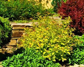Озеленение, красивые растение возле подпорной стенки, посадка растений, ландшафтный дизайн