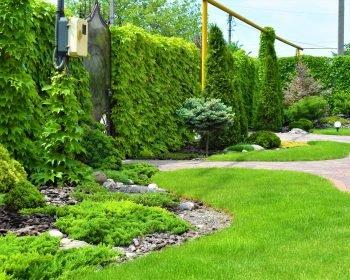 декоративная композиция, туя Смарагд, штамбовая сосна на газоне, зеленая изгородь, ландшафтный дизайн